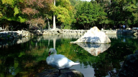 Экскурсия Где подступает к морю сад в Учкуевке