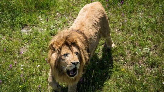 """Экскурсия """"Тайган"""" - Парк львов  по Севастополю"""