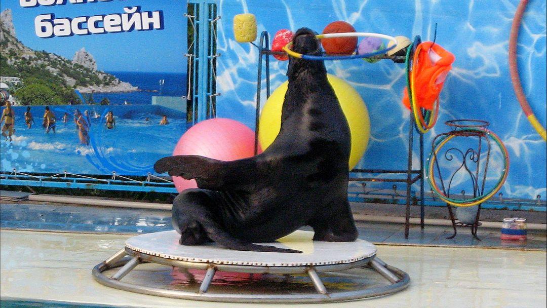 Театр морских животных  - фото 3