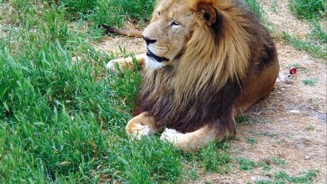 Экскурсия Парк львов «Тайган»