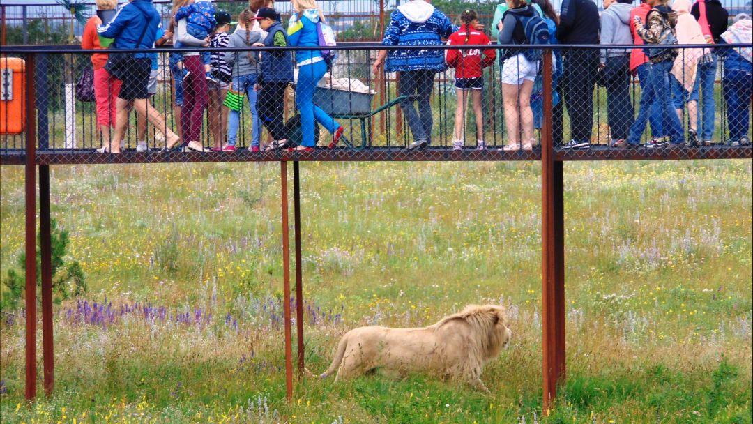 Парк львов «Тайган» - фото 2