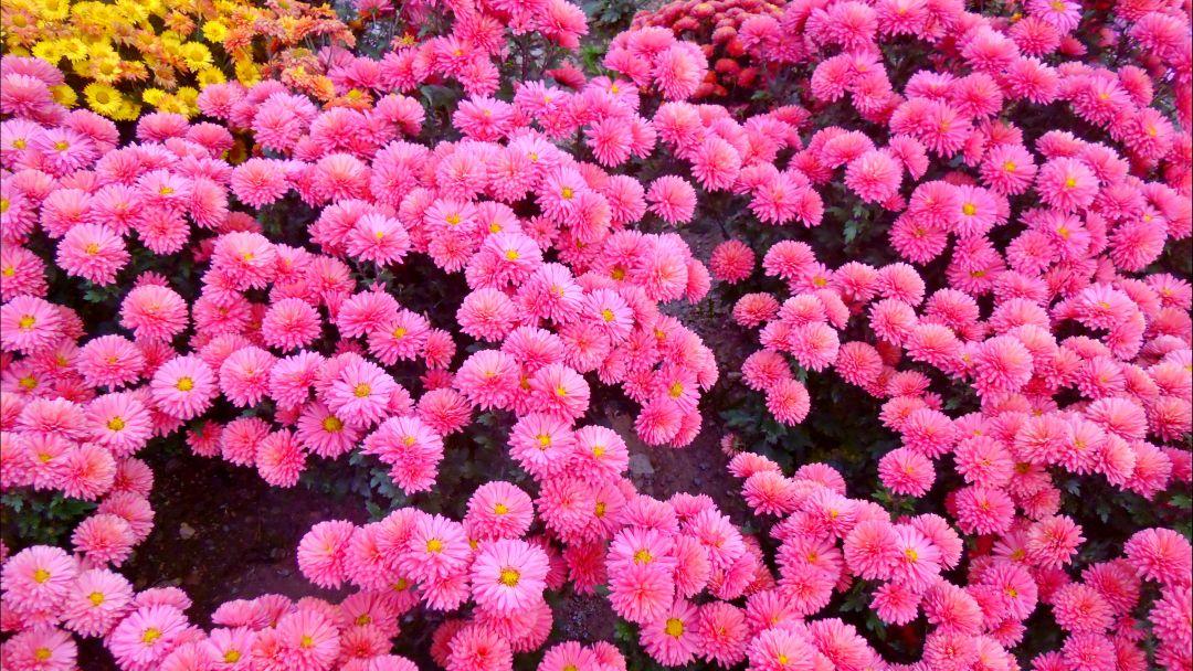 Никитский ботанический сад и Ялтинские красоты - фото 4