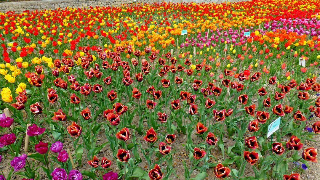 Никитский ботанический сад и Ялтинские красоты - фото 5