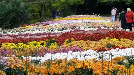 Никитский ботанический сад и Ялтинские красоты - фото 7