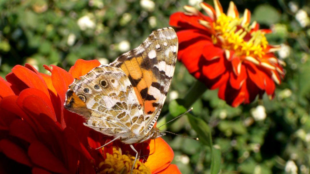 Никитский ботанический сад и Ялтинские красоты - фото 8