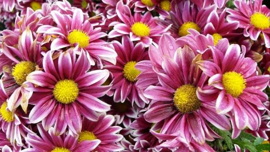 Никитский ботанический сад и Ялтинские красоты - фото 9