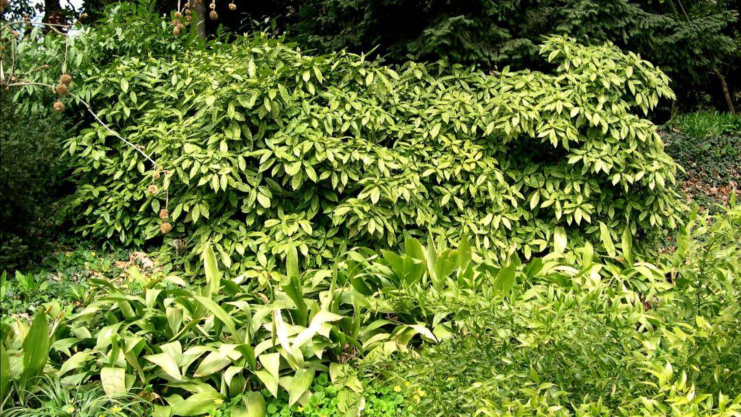 Никитский ботанический сад - фото 2