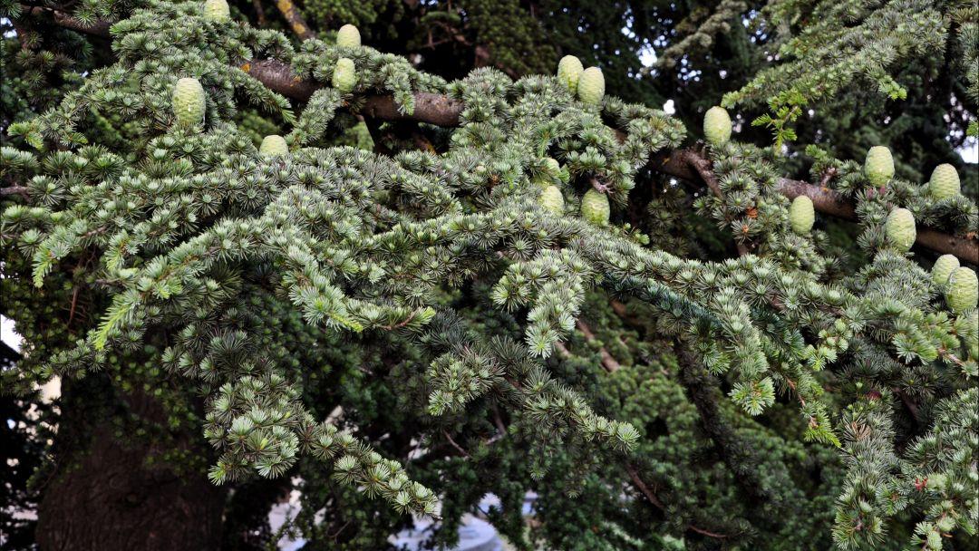 Никитский ботанический сад - фото 5