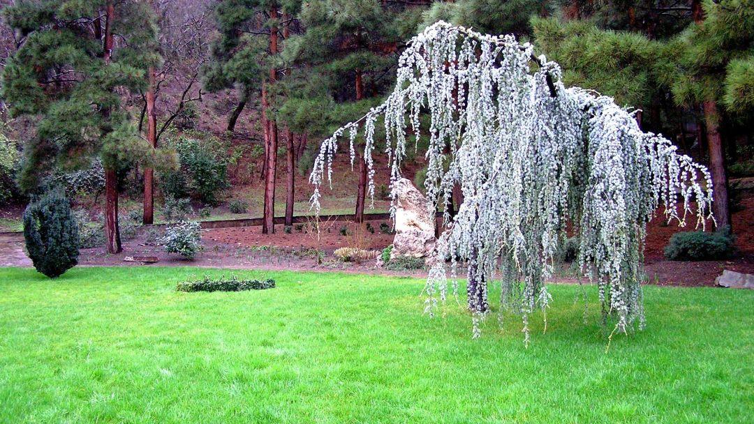 Никитский ботанический сад - фото 6