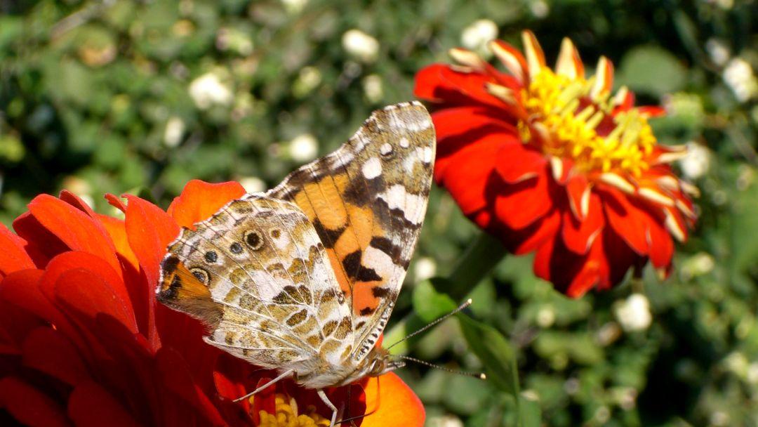 Никитский ботанический сад - фото 7