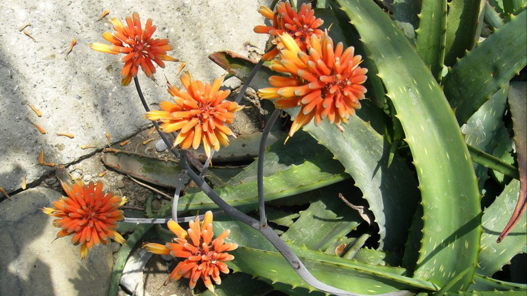 Никитский ботанический сад - фото 8
