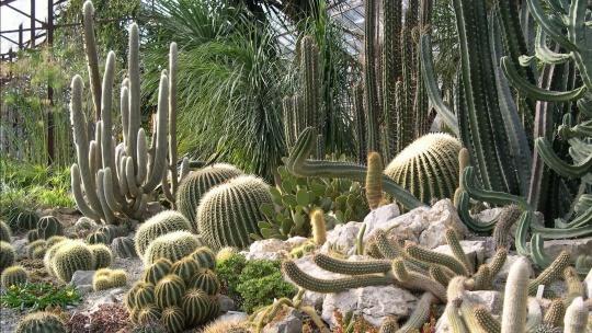 Никитский ботанический сад - фото 9