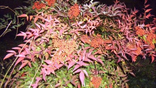 Никитский ботанический сад - фото 10