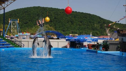Экскурсия Архипо-Осиповский дельфинарий в Геленджике