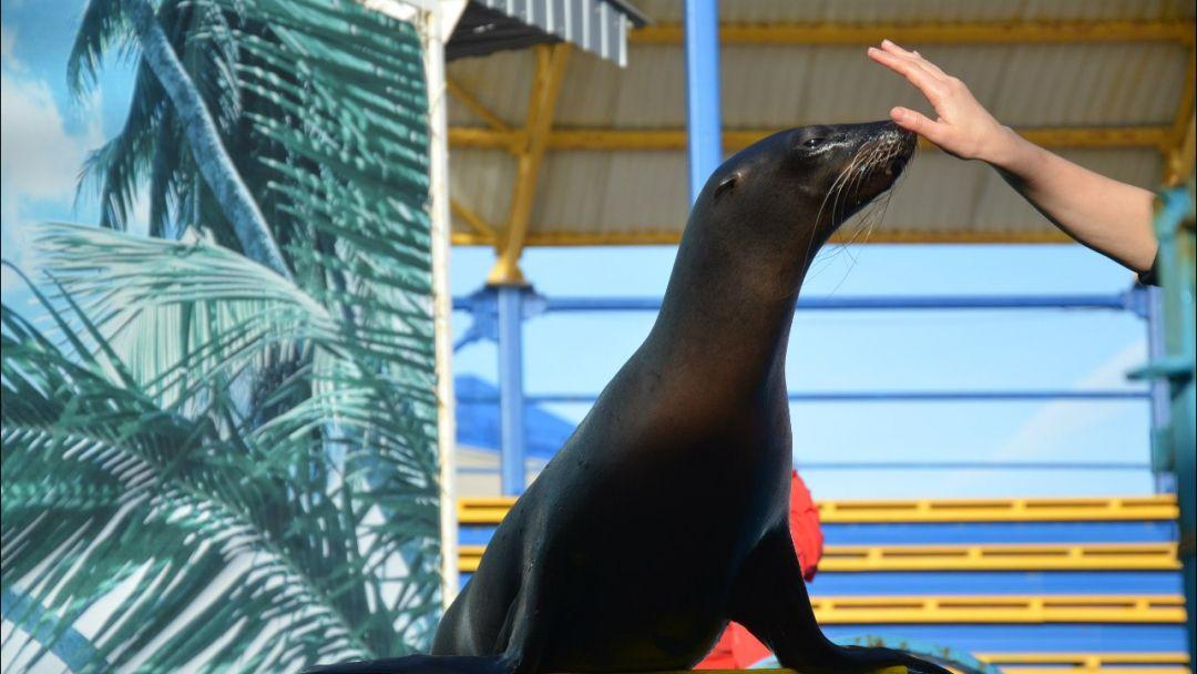 Архипо-Осиповский дельфинарий + музей хлеба и вина - фото 2