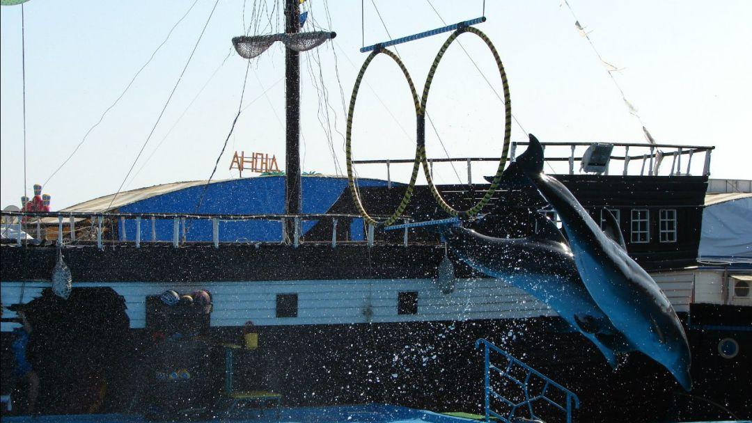 Архипо-Осиповский дельфинарий + музей хлеба и вина - фото 3