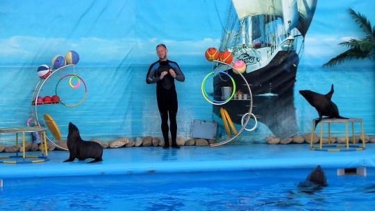Экскурсия Дельфинарий в Коктебеле в Судаке