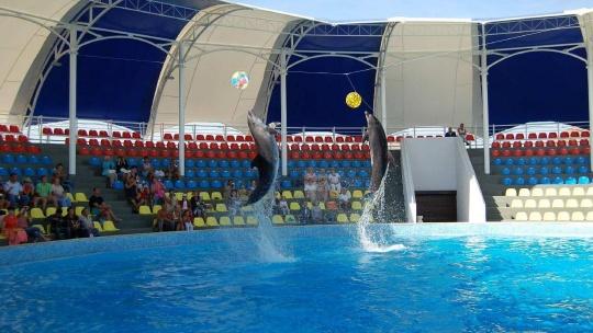 Дельфинарий в Коктебеле - фото 2