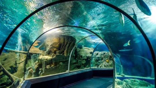 Экскурсия Океанариум в Адлере в Сочи