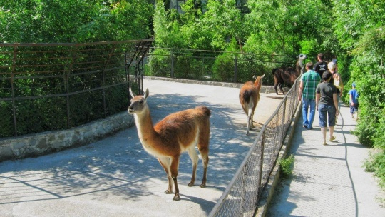 Поляна сказок и Зоопарк - фото 2