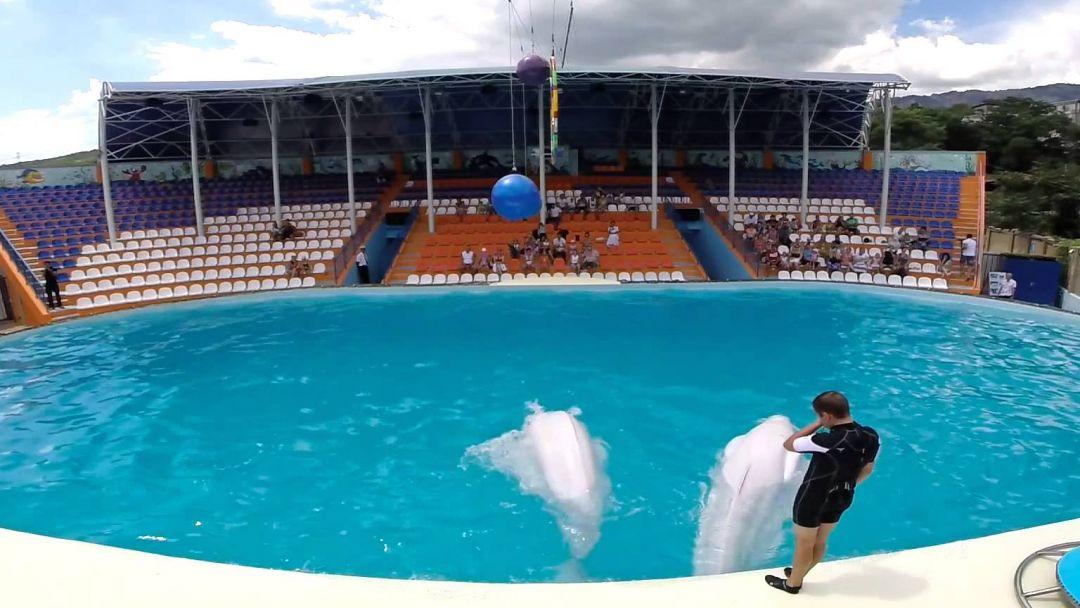 Акватория – театр морских животных - фото 2