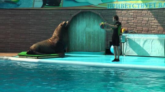 """Экскурсия Шоу морских млекопитающих в театре морских животных """"Акватория"""" в Ялте"""