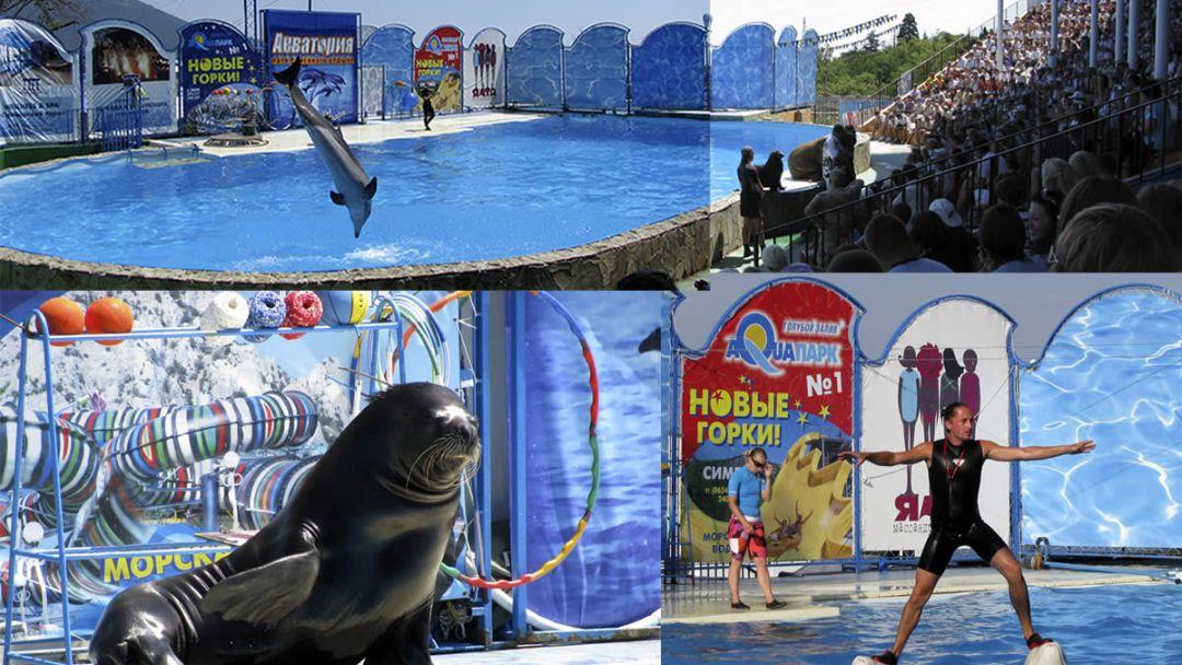 """Шоу морских млекопитающих в театре морских животных """"Акватория"""" - фото 2"""