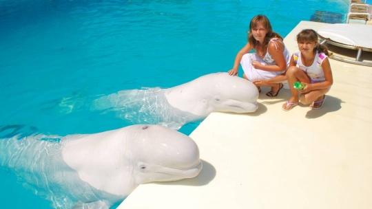 """Шоу морских млекопитающих в театре морских животных """"Акватория"""" - фото 3"""