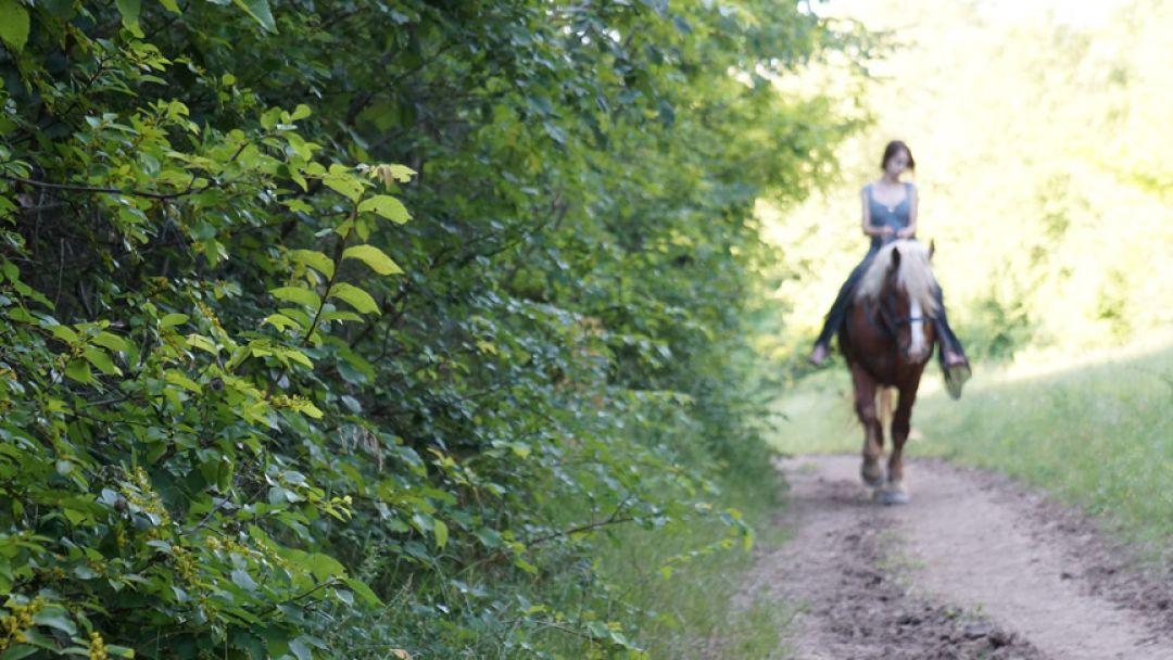 Экскурсия Конные прогулки: большой круг