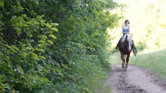 Конные прогулки: экстрим маршрут (рысь, галоп) - фото 3