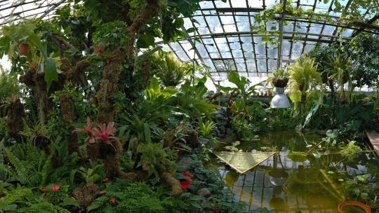 Экскурсия Ботанический сад ИГУ