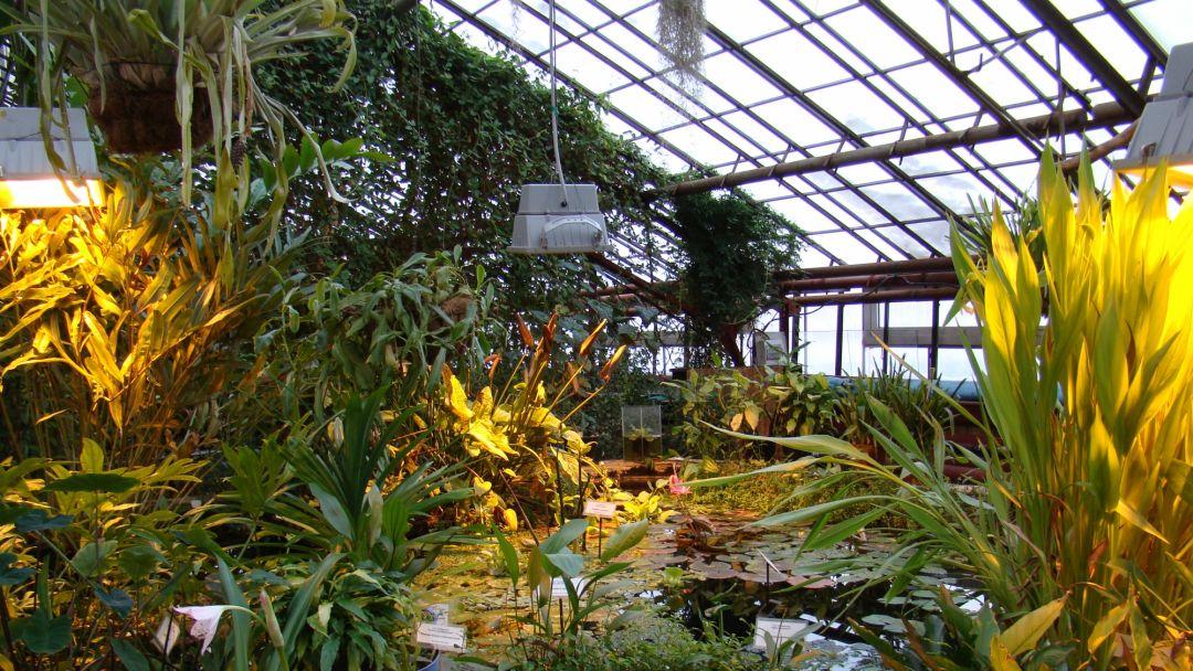 Ботанический сад ИГУ - фото 2