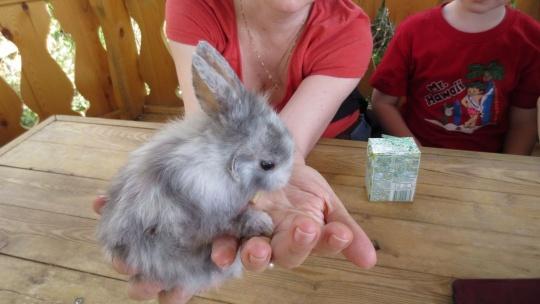 Экскурсия Иркутский контактный зоопарк в Иркутске