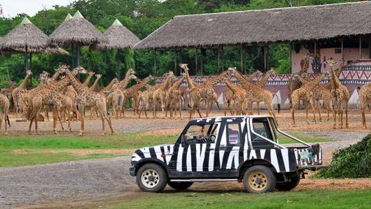 "Экскурсия Парк ""Safari World"" - Мир Сафари в Бангкоке"