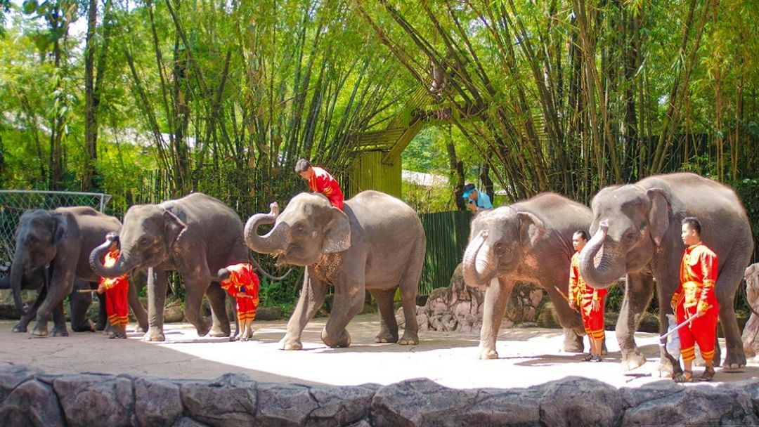 """Парк """"Safari World"""" - Мир Сафари - фото 4"""