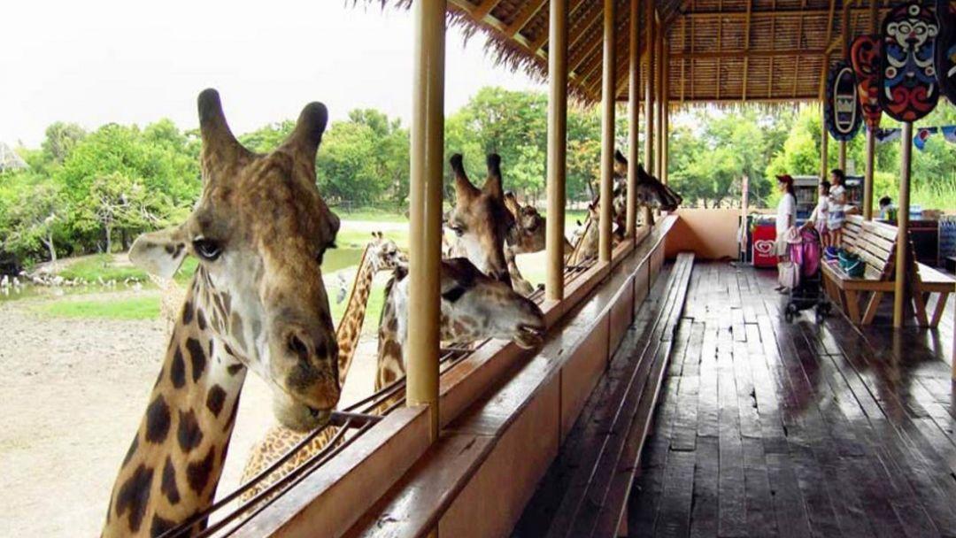 """Парк """"Safari World"""" - Мир Сафари - фото 6"""