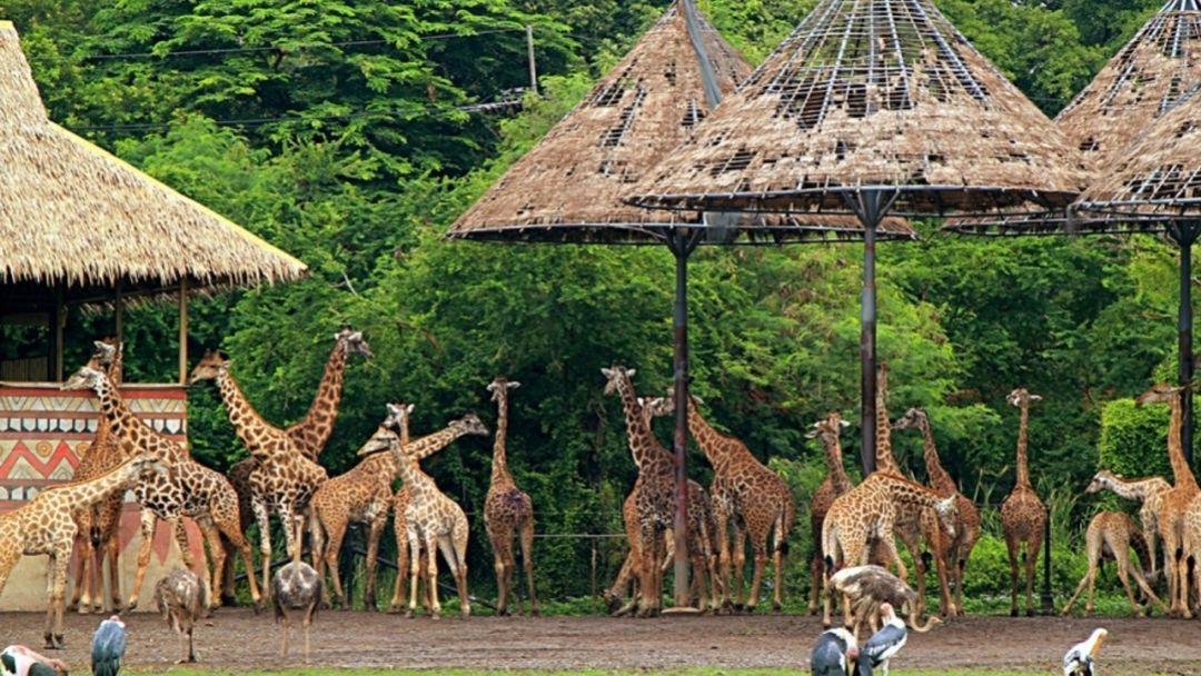 """Парк """"Safari World"""" - Мир Сафари - фото 8"""