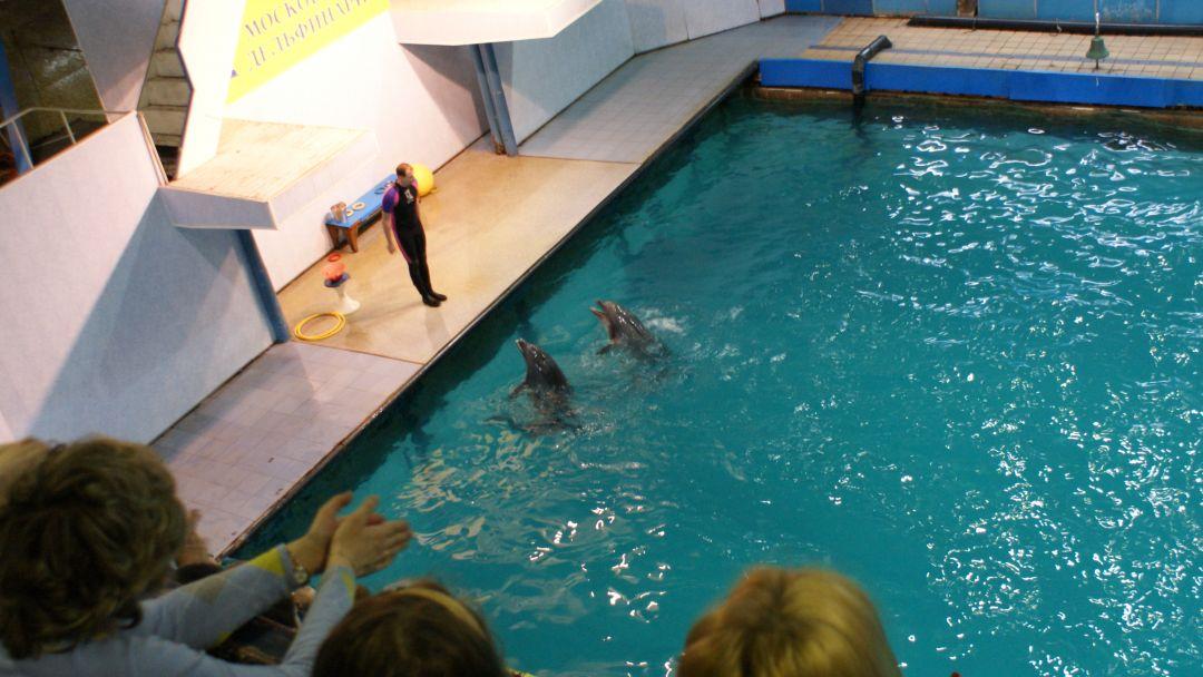 Дельфинарий утришский в Анапе