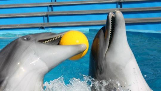 Архипо-Осиповский дельфинарий в Геленджике