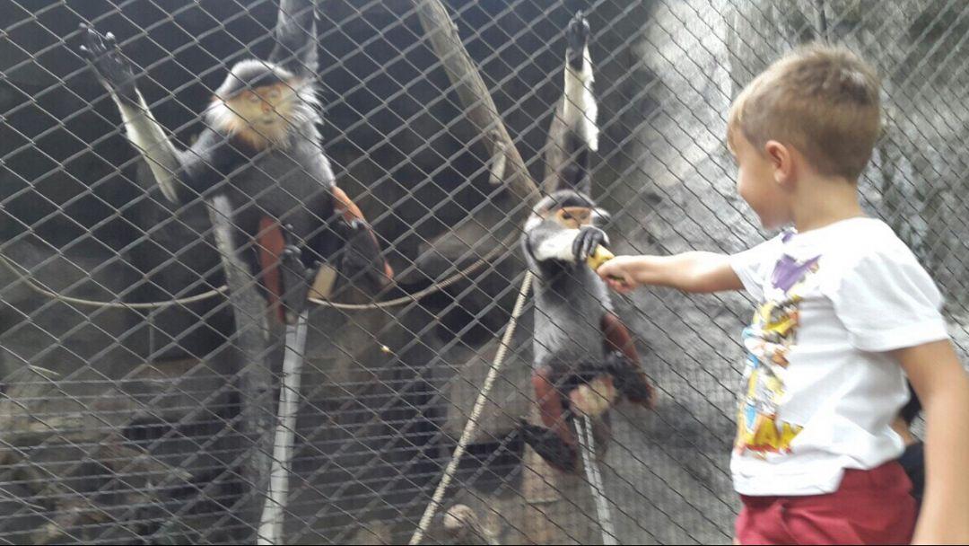 Зоопарк Као Кео - фото 2