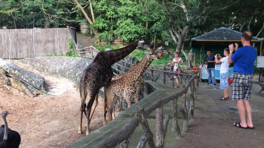 Зоопарк Као Кео - фото 3