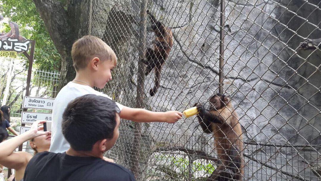 Зоопарк Као Кео - фото 4