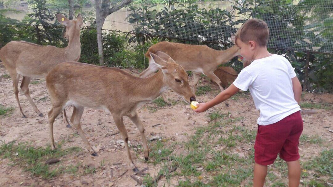 Зоопарк Као Кео - фото 5
