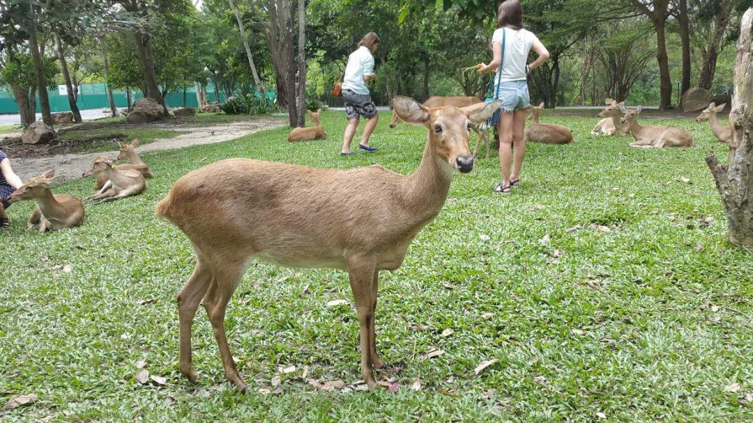 Зоопарк Као Кео - фото 8