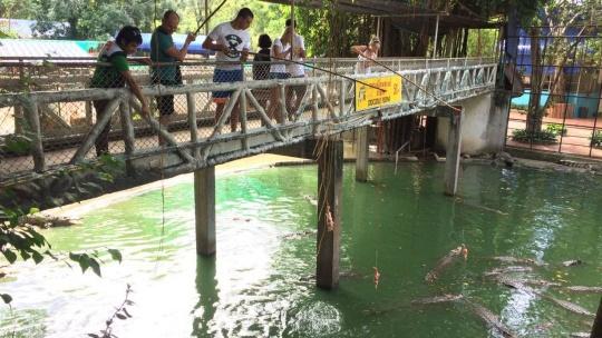 Экскурсия Крокодиловая ферма  в Паттайе