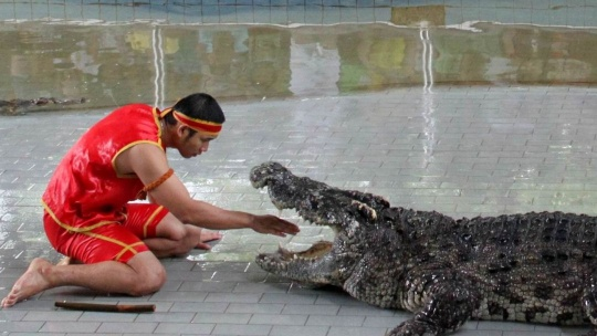 Крокодиловая ферма  - фото 5