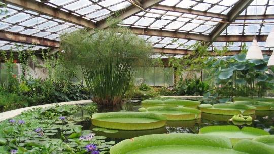 Ботанический сад БИН РАН в Санкт-Петербурге