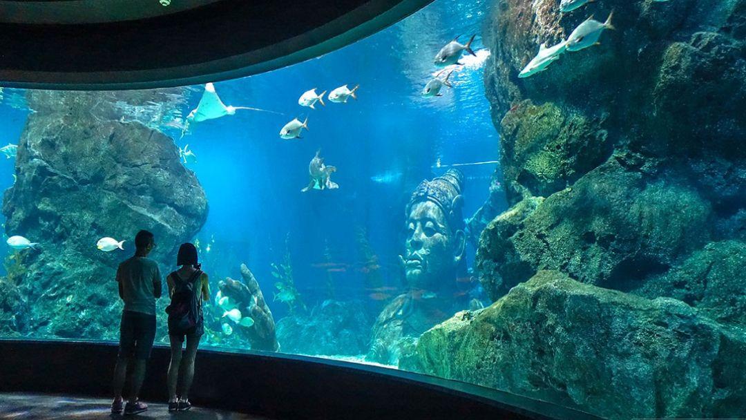 Океанариум SeaLife Ocean World - фото 4