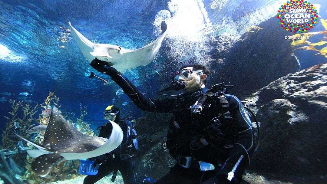 Океанариум SeaLife Ocean World - фото 6