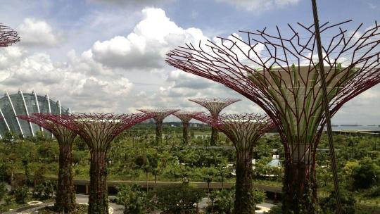Экскурсия Ботанический сад у залива в Сингапуре